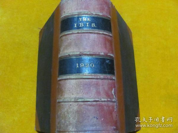 THE IBIS  1920锛��辨������锛�����绾辩簿瑁���