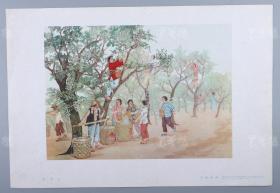 1959年1版1印 天津美术出版社出版 王达佛作 宣传画《采李子》一张(尺寸:26*38cm)HXTX313887