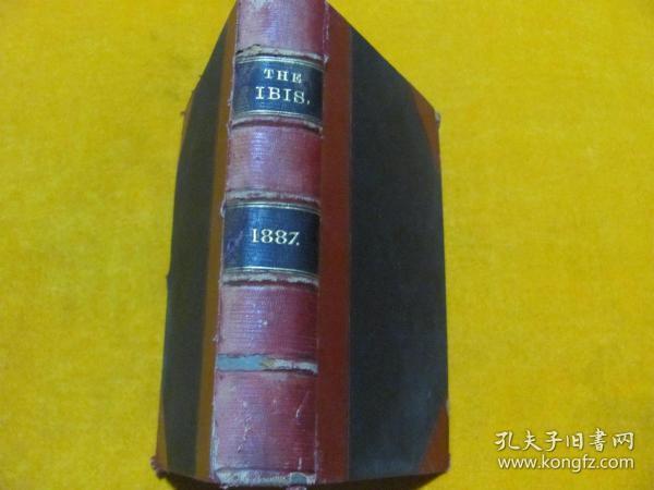 THE IBIS 1887 锛��辨������锛�����绾辩簿瑁���