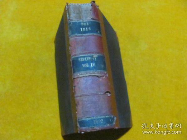 THE IBIS 1892 锛��辨������锛�����绾辩簿瑁���