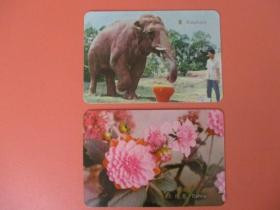 1974年年历片 【象】稀缺张【大理花】2张合售