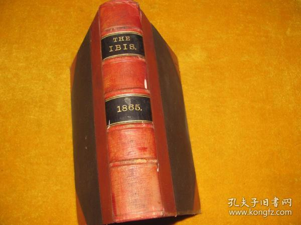 THE IBIS 1865 锛��辨������锛�����绾辩簿瑁���