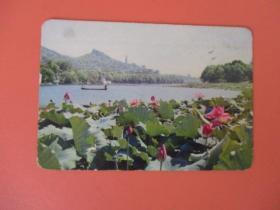 1973年年历片 【湖上风荷】