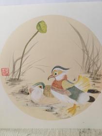 中国画  鸳鸯