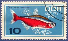 雪龙鱼--东德邮票-德意志民主共和国邮票--外国邮票甩卖--实拍--包真