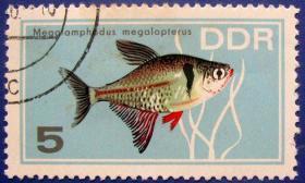大黄鱼--东德邮票-德意志民主共和国邮票--早期外国邮票甩卖--实拍--包真