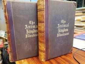 Johnsons Natural History, Comprehensive, Scientific, and Popular, Illustrating and Describing the Animal Kingdom with its Wonders and Curiosities