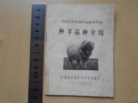 1970年【安徽省滁县地区大柳种羊场种羊品种介绍】图文并茂