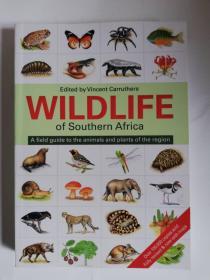 WILDLIFE of southern Africa 南部非洲的野生动物