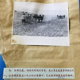 五六十年代新华社老照片一张,甘肃永昌县焦家庄人民公社在春耕中