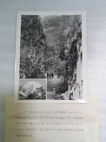 """1929古生物学家裴文中发现""""北京猿人""""头盖骨化石 1983年老照片一张"""