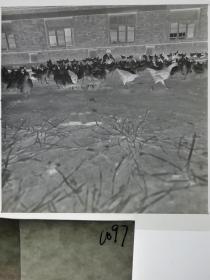 120底片1张 本溪日报摄影资料 记者下乡 村办养鸡场