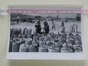 新闻展览照片:红旗渠畔红烂漫(2)河南林县小店公社袁家庄大队 今年大旱夺高产。