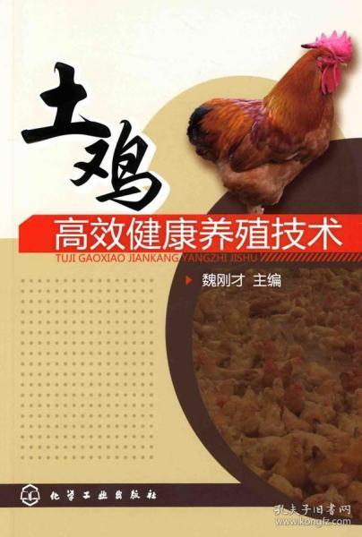 土鸡高效健康养殖技术