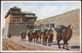 【影像资料】民国早期北京风俗民情明信片_北京城楼及城墙外的骆驼运输队(北京骆驼)