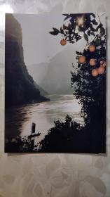 """彩色照片:""""三峡特产:甜美的柑橘和壮丽的风景""""的彩色照片    共1张照片售       彩色照片箱0067--22"""