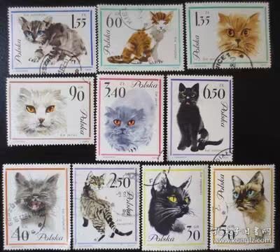 波兰邮票 1964年 宠物猫 10全 盖销 戳位随机 外国邮票