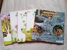 熊田千佳慕的世界---彩绘法布尔昆虫记(全5册)