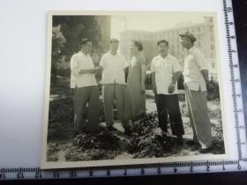 原国家民委专家张红、段星光旧藏老照片1张 北京市委党校委员合影1957年