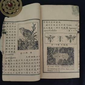 民国时期 线装手写石印课本,山西三晋中学《生物学》,内有精美图画