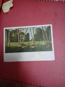 1929年俄文明信片【白桦树】