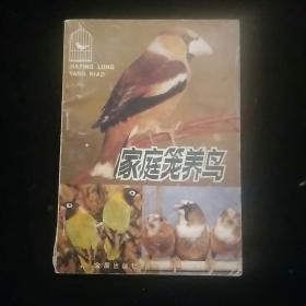 家庭笼养鸟 内页干净