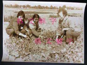 老照片 大约六七十年代 一个摄影师的系列作品 美女 知识青年在农村 接受贫下中农再教育 大尺寸 长约19cm