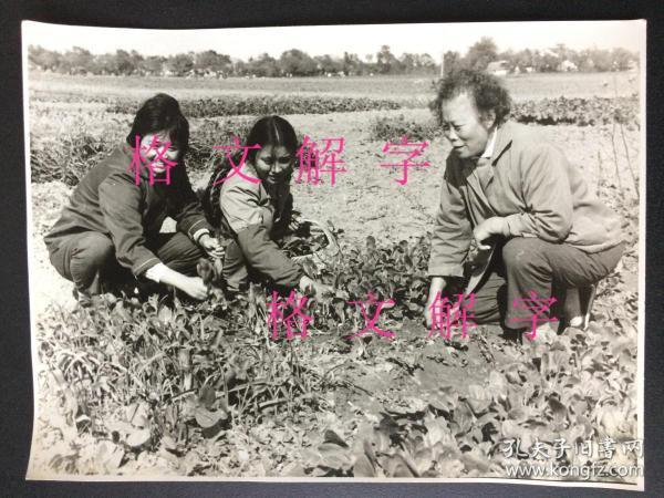 老照片 大约六七十年代 一个摄影师的系列作品 美女 知识青年在农村 接受贫下中农再教育 大尺寸 长约19.5cm