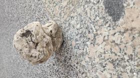 奇石收藏;天然奇石造型石石狮子一个11厘米*10厘米*9厘米