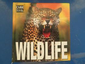 宝书: 野生物 CUBE BOOK: WILDLIFE
