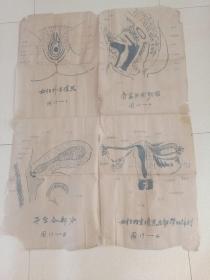 女性生殖器手绘全图