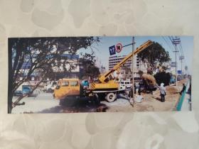 彩色照片: 城市绿化部门树木移栽的彩色照片       共1张照片售     彩色照片箱3   00193