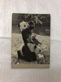 1973年熊猫年历卡,中国旅行社