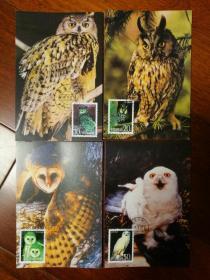 极限片:1995-5鸮邮票,首日原地戳