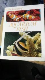 AQUARIUM FISH 签名