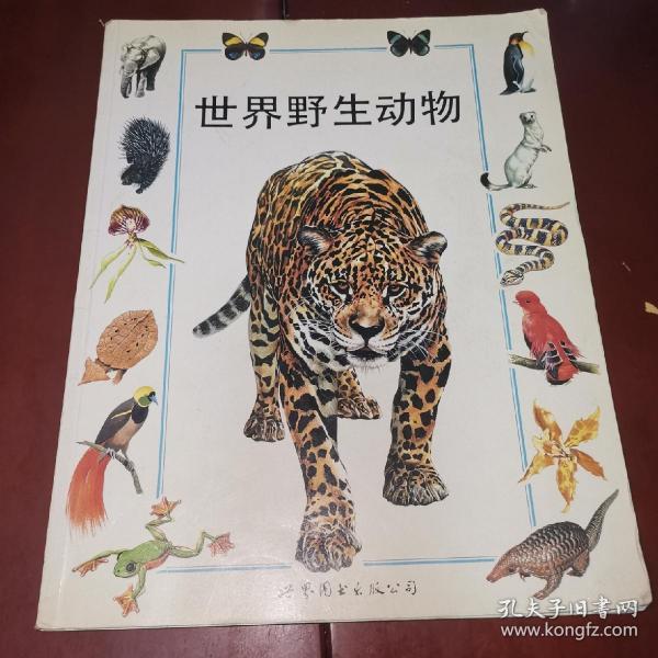 世界野生动物