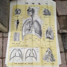 呼吸器 图4