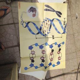 DNA的分子结构模式图