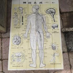神经系统一图7