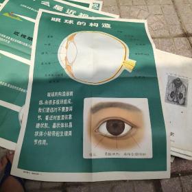 学校卫生保健挂图 假性近视和真性近视。眼的调节作用。什么是近视眼。眼球的结构,四张合售