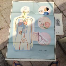 中学生理卫生教学挂图44感染病的传染途径