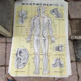 器官.血管神经投影和穴位图12  一张