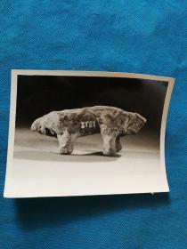 文物照片 尺寸12x9厘米