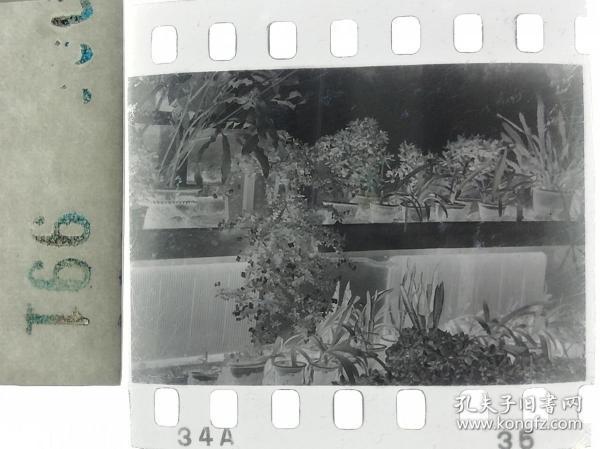 纪实摄影底片1张 花房2