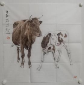 保真书画,当代画牛名家郑柏林国画一幅,尺寸70×69cm