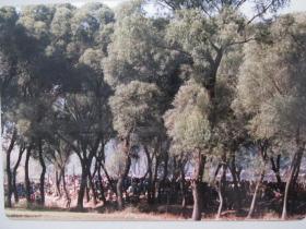 改革开放初期影展照片——柳林深处的农贸市场第二幅
