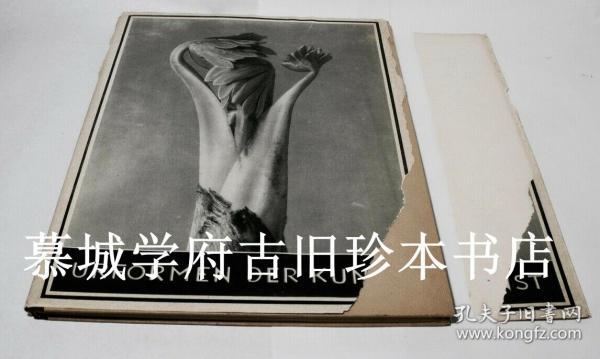 1948版大开本/布面精装/铜版印刷德国摄影先驱卡尔布罗斯菲尔德植物摄影专集《艺术的原型》含96幅照片 Karl Blossfeldt: Urformen der Kunst