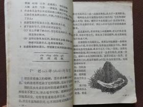 80年代90年代人教版六年制小学语文课本一套,原版,库存,精品,直板书,实物