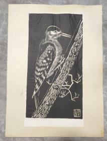 五十年代木刻版画原作:啄木鸟(23.5厘米×11.5厘米)