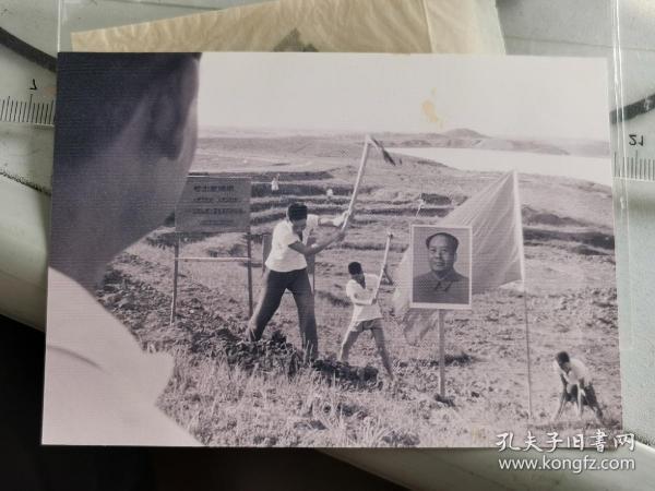 1967年,舒城春秋塘茶场职工在插有毛主席像的茶叶地锄地,底片加2004冲洗片。